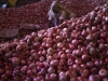 INDIA-ONION/PRICES
